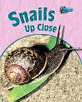 Snails up Close