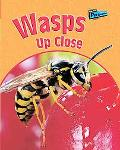 Wasps up Close