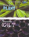 How Does A Plant Become Oil? (Perspectives)