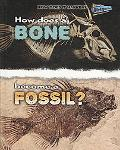 How Does A Bone Become A Fossil? (Perspectives)