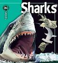 Insiders Sharks (Insiders Series)