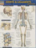 Joints & Ligaments Advanced