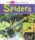 The Pebble First Guide to Spiders