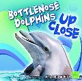 Bottlenose Dolphin up Close