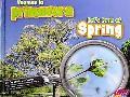 Veamos la Primavera/Let's Look At Spring