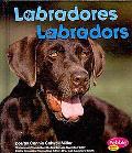 Labradores/Labradors