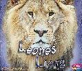 Leones (Lions)