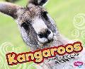 Kangaroos (Pebble Plus)
