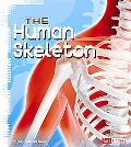 The Human Skeleton (Fact Finders)