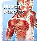Human Muscles (Fact Finders)