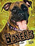 Boxers (Edge Books)