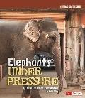 Elephants under Pressure : A Cause and Effect Investigation