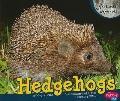 Hedgehogs (Pebble Plus)