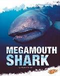 Megamouth Shark (Blazers)