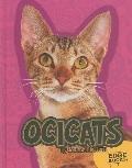 Ocicats (Edge Books)