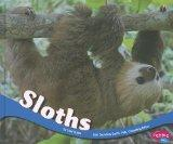 Sloths (South American Animals)