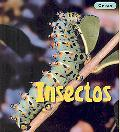 Insectos/ Insects