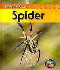 Spider (2nd Edition) (Heinemann First Library)