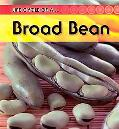 Bean: 2nd Edition (Life Cycle of a)