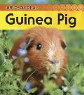 Guinea Pig: 2nd Edition (Life Cycle of a)