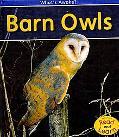 Barn Owls (2nd Edition) (Heinemann Read and Learn)