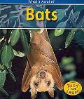 Bats: 2nd Edition (What's Awake?)