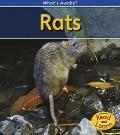 Rats: 2nd Edition (What's Awake?)