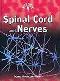 Spinal Cord and Nerves: (2nd Edition) (Body Focus)