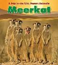 Meerkat (Heinemann Read and Learn)