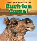 Bactrian Camel (Heinemann Read and Learn: a Day in the Life: Desert Animals)