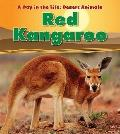 Red Kangaroo (Heinemann Read and Learn: a Day in the Life: Desert Animals)