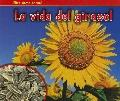 La vida del girasol (The Life of a Sunflower) (Mira Como Crece! / Watch It Grow) (Spanish Ed...