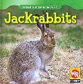 Jackrabbits (Animals That Live in the Desert)