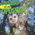 The Life Cycle of an Opossum (Nature's Life Cycles)