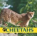 Cheetahs (Cats of the Wild)