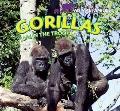 Gorillas: Life in the Troop (Animal Families)