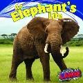 Elephant's Life