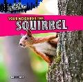 Your Neighbor the Squirrel (City Critters)