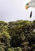 Cuauhtémoc : Descending Eagle