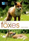 RSPB Spotlight: Foxes