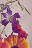 Flowers: Flower Lover's Journal/Notebook/Diary (Volume 1)