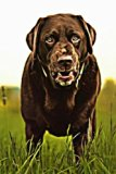 Chocolate Lab: A Dog Lover's Journal:  180 Page Lined Journal/Notebook/Diary (Volume 6)