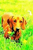 Dachshund: Dog Lover's Journal/Notebook/Diary (Volume 12)