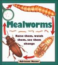 Mealworms Raise Them, Watch Them, See Them Change