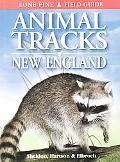 Animal Tracks of New England