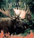 Moose Giants of the Northern Forest