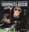 Chimpanzee Rescue Changing The Future For Endangered Wildlife
