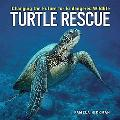 Turtle Rescue Changing The Future For Endangered Wildlife