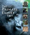 Primate Family Tree : The Amazing Diversity of Our Closest Relatives