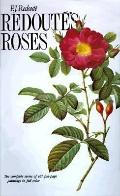 Redoute Roses - P. J. Redoute - Hardcover
